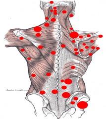 Mięśnie szkieletowe